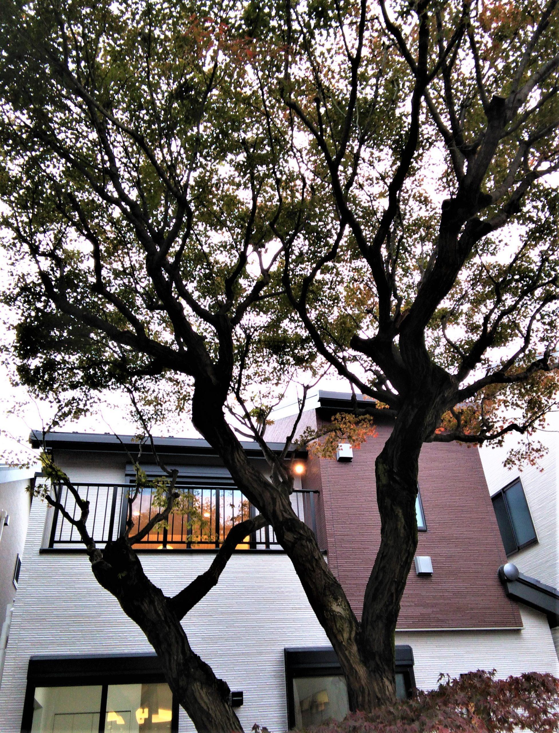 ポラス、練馬の農園別荘跡地に分譲住宅―格式を継承、2カ月弱で9棟中8棟成約